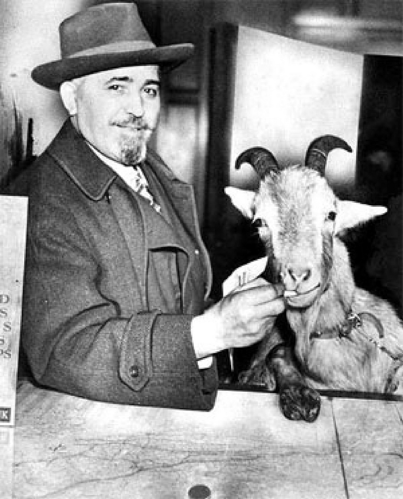 "How a Billy Goat ""Cursed"" the Chicago Cubs"